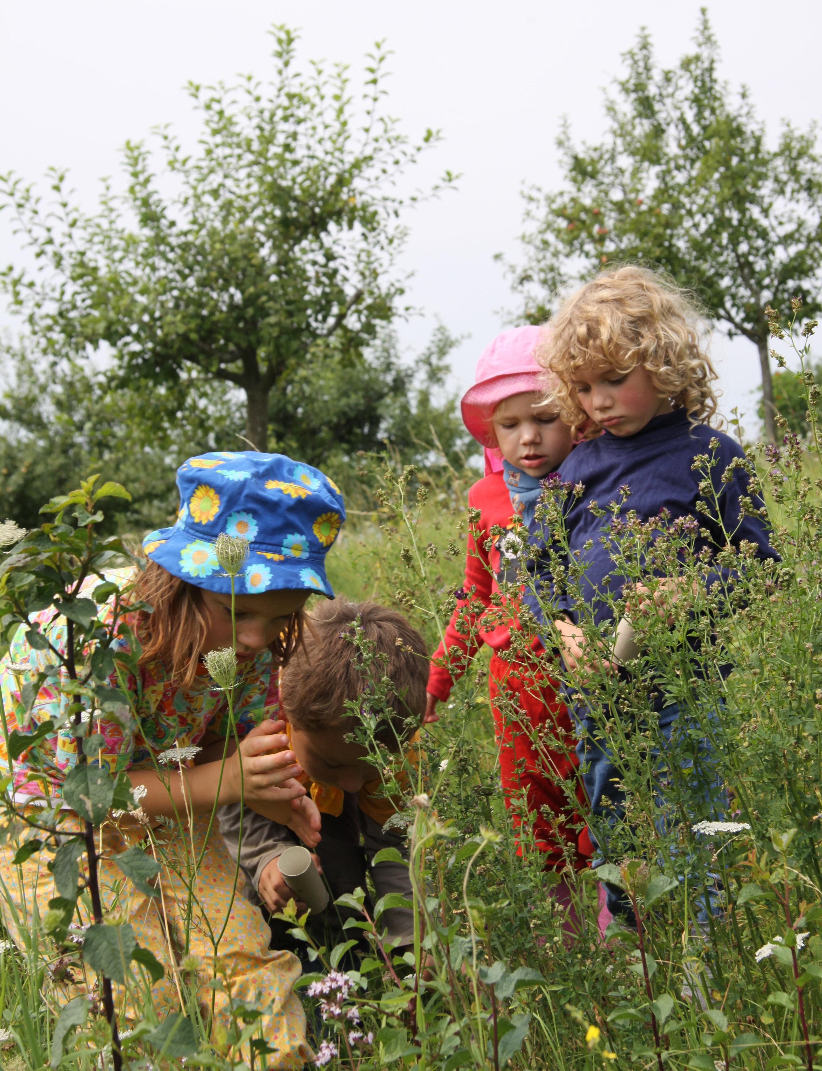 Kindergartenkinder beobachten Schmetterlinge