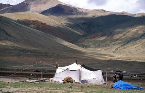 nomaden2-1544359961-75.jpg