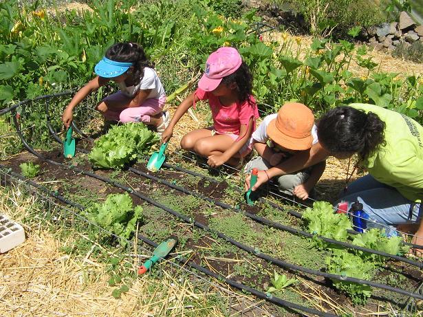 Los jardines no están solamente para jugar, pues los niños aprenden aquí también a relacionarse con al naturaleza. Y lo más lindo: La alegría de niños y niñas cuando las plantassembradas por ellos y ellas brotan, y pueden cosechar sus propias verduras.
