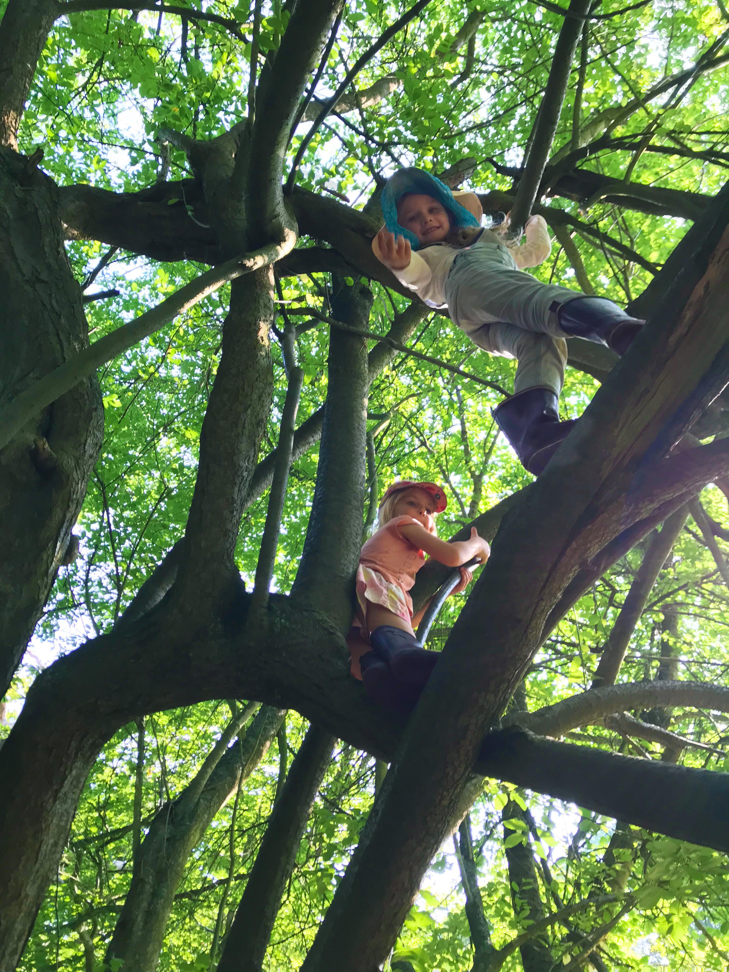 The children climb in the trees - Photo by Rikke Rosengren