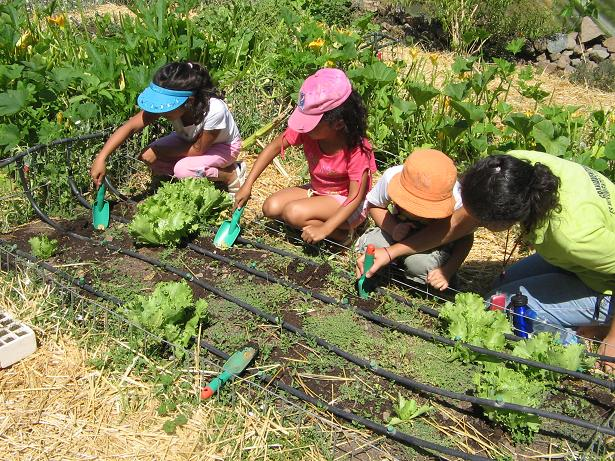 Gardens are not just for playing, because children also learn how to deal with nature here. And the most beautiful thing: When the first self-sown plants sprout and their own vegetables are harvested, the little gardeners are happy.