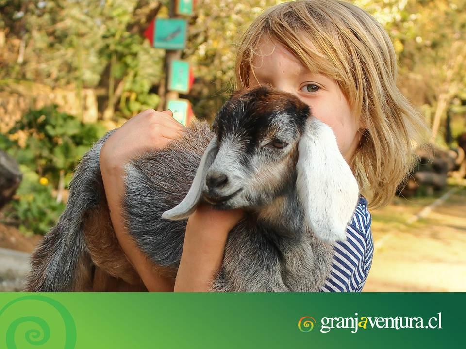 Los niños aman el contacto directo con los animales. Para las clases de las escuelas tan centradas en lo cognitivo, Granjaventura es una cambio bienvenido para niños y niñas