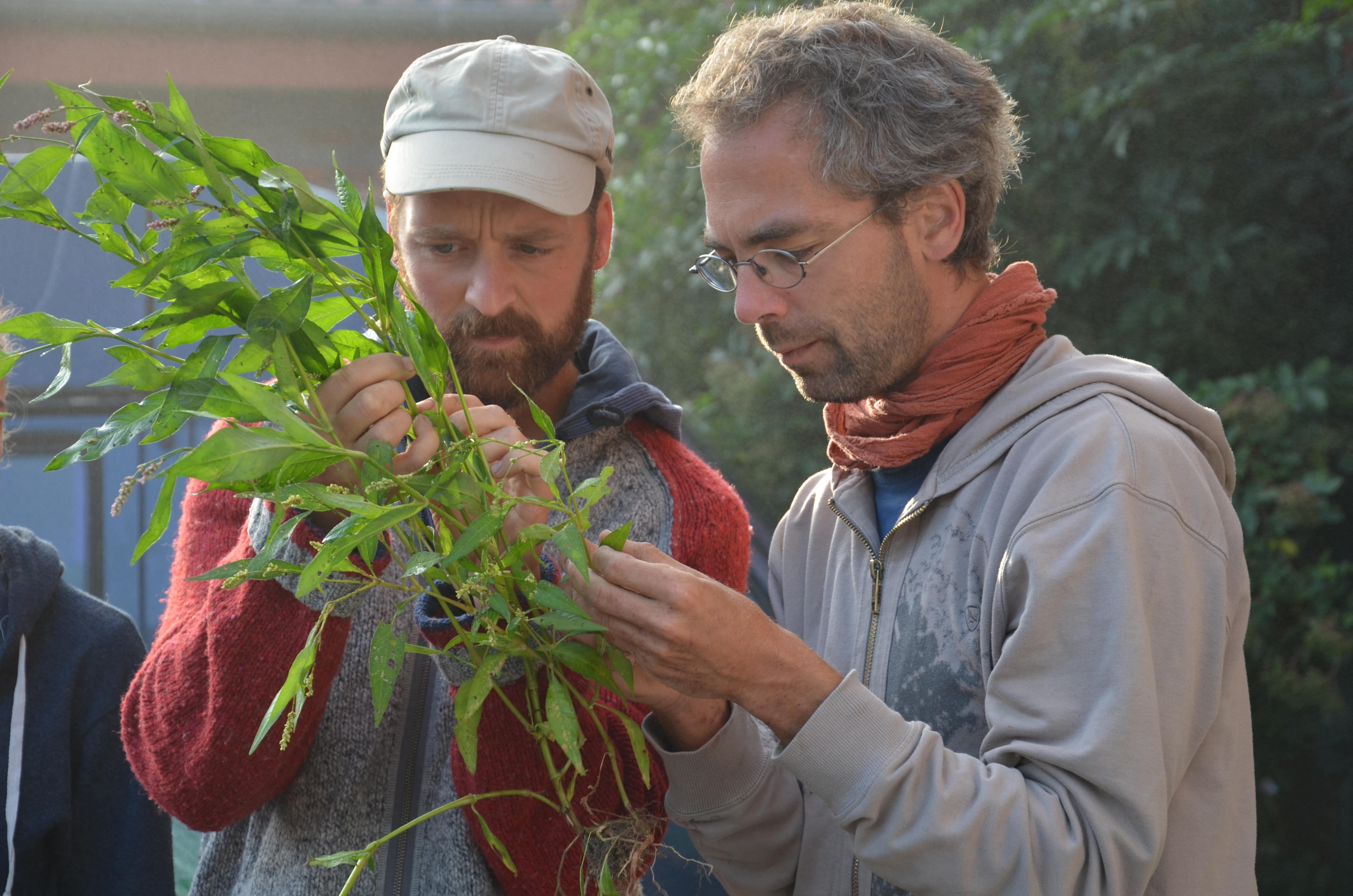 Mit den Demeter Bauern vor Ort werden die Ausbildenden fachkundig in die biodynamische Pflanzenkunde unterrichtet. z.B. Biodynamische Schädlingsbekämpfung lässt sich so am besten exemplarisch erklären.