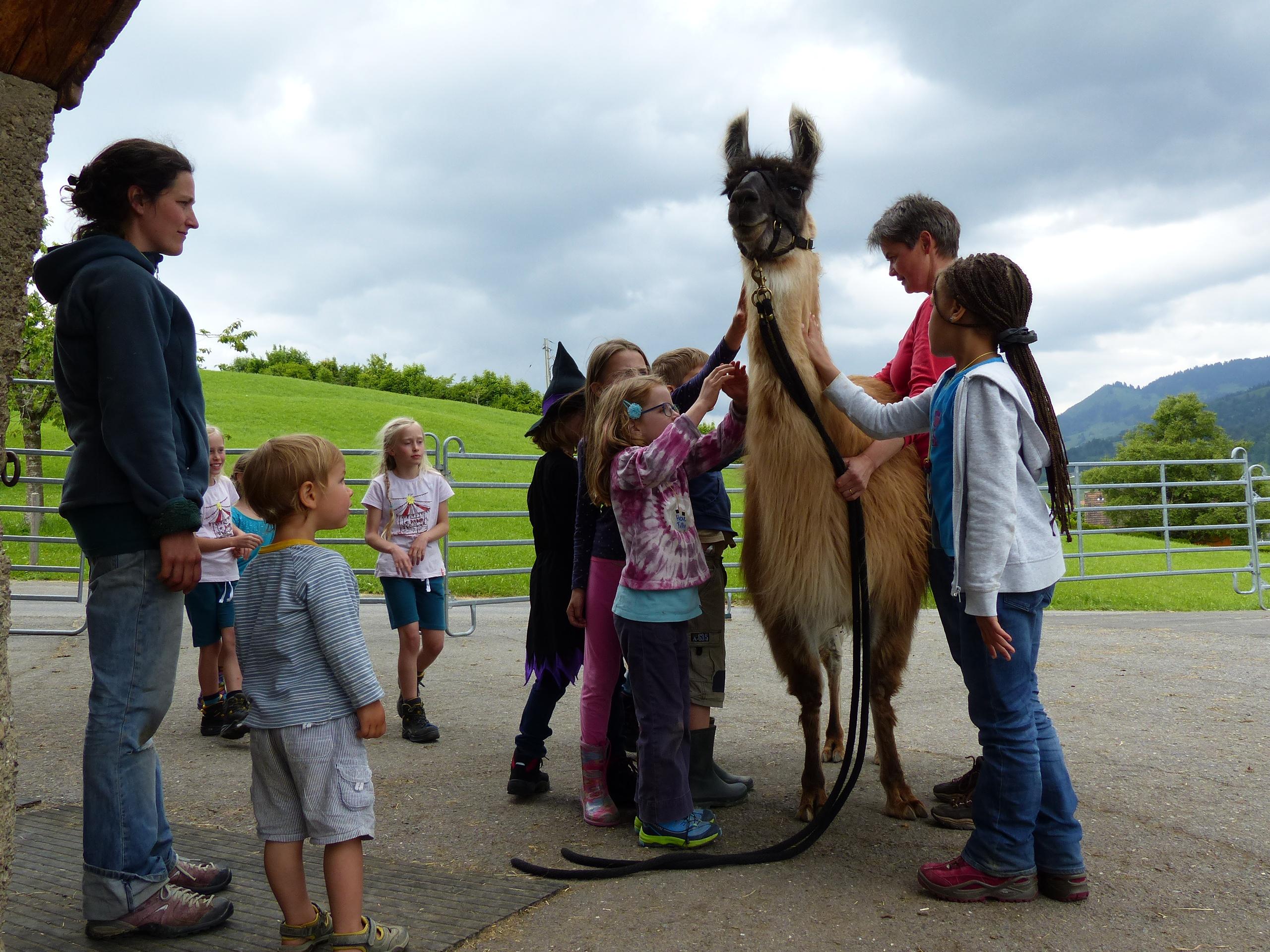 Geduldig lässt sich das Lama streicheln und die Kinder sind begeistert und staunen, wenn sie es berühren dürfen.