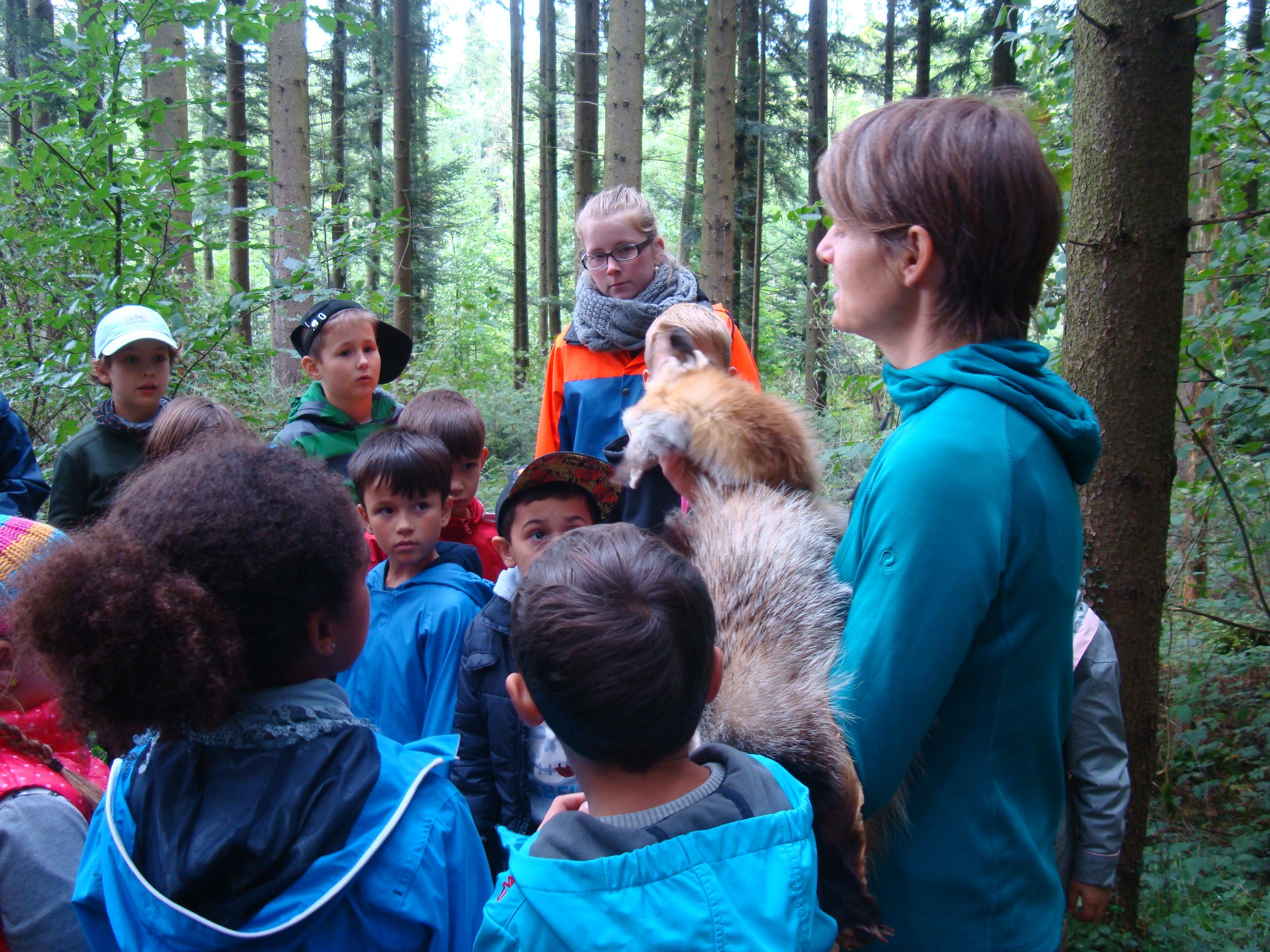 Abenteuer, Wildnis, Bewegung – hier steckt das Potenzial der Waldpädagogik der Zukunft. Bei dem Thema Tierspuren sind die Schüler und Schülerinnen ganz Ohr, wenn Nicole Schwery ihnen ein Fuchsfell, Trittsiegel oder Fuchsbau zeigt