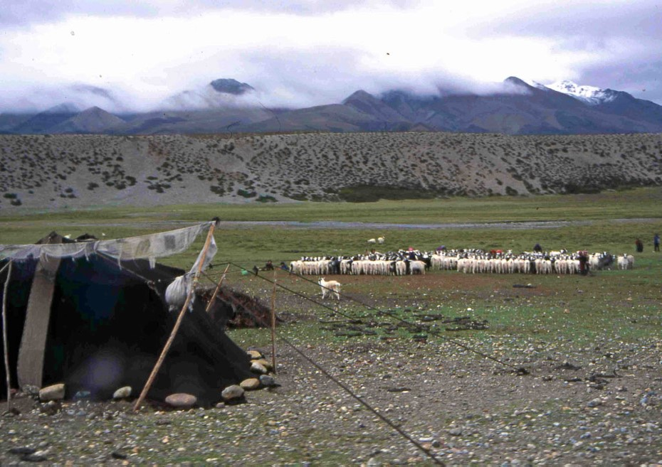nomaden1-1544359971-55.jpg