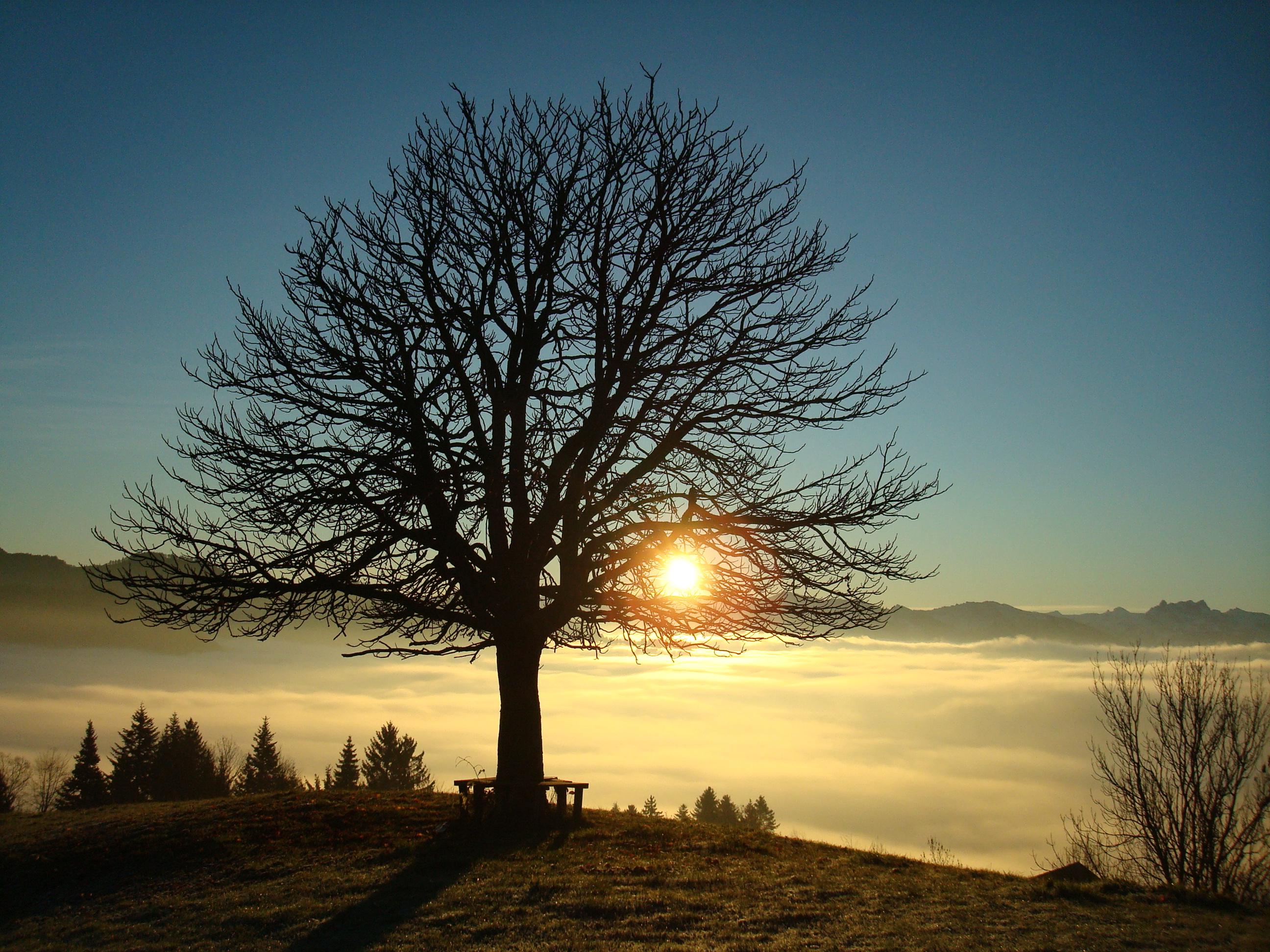 Dieser Baum steht auf dem Auenberg im Zürich Oberland, Ausbildungsplatz der Meisterschaft authentischer Naturpädagogik