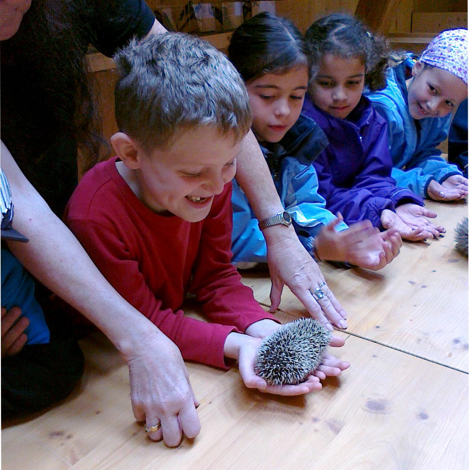 Die Schüler und Schülerinnen erfahren bei den Walderlebnistagen mit der PH Thurgau echte Erfahrungen, wie hier in dem Bild mit einem Igel