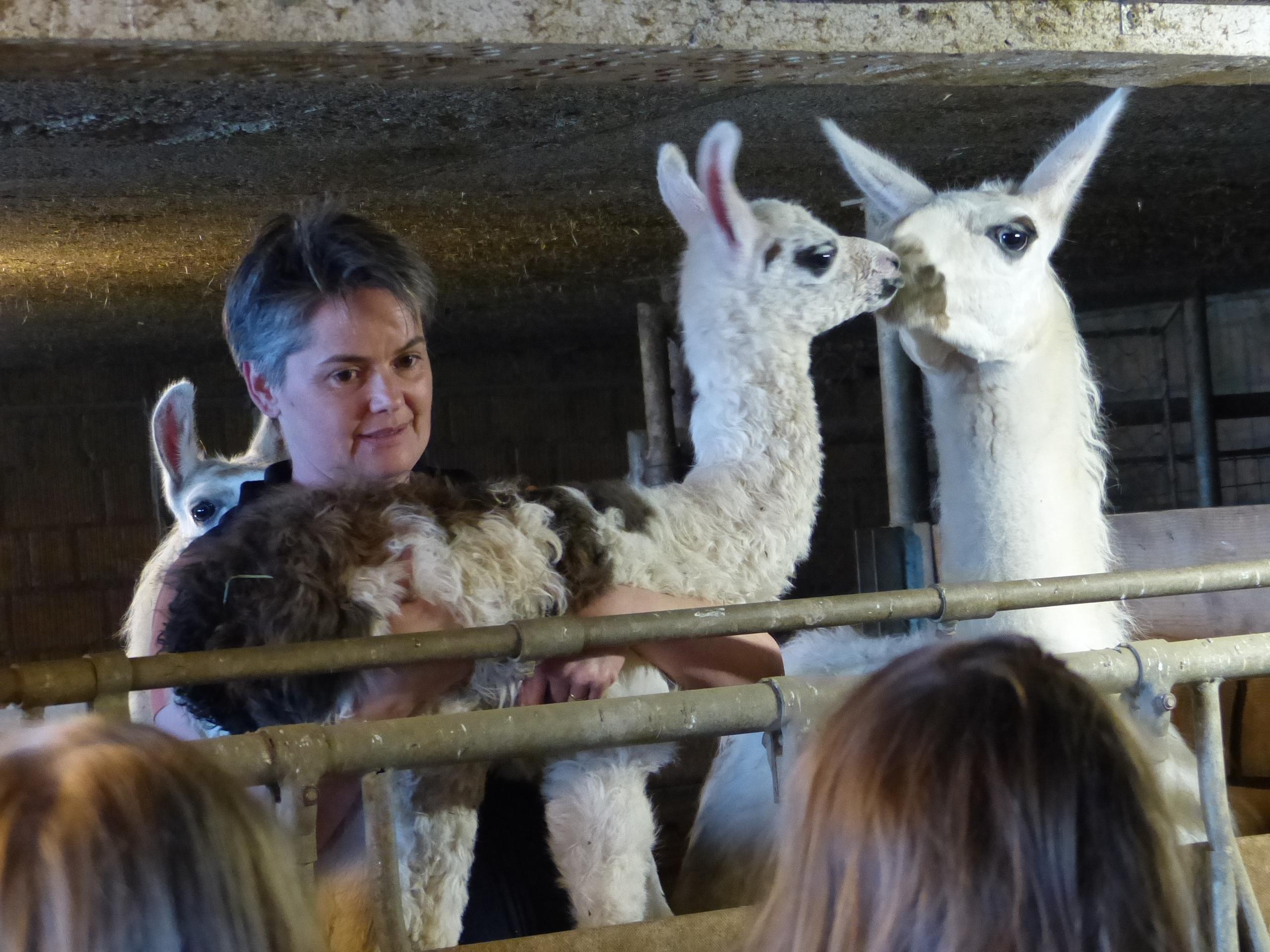 Der Lamahof wirtschaftet mit den Lamas als Zucht- und Weidetiere. Sie achten bei der Zucht sehr auf die Gesundheit ihrer Tiere. Lamas sind als Herdenschutz für Schafe, Hühner und Ziegen bestens geeignet