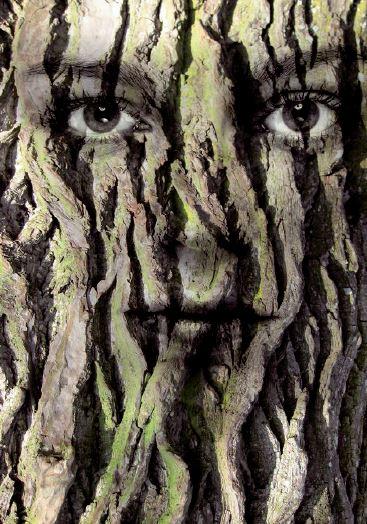 Buchcover Baum Menschen
